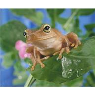 frog save us from disease?